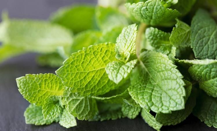 Mint leaves, ie malayalam