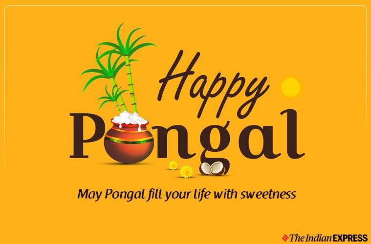 happy pongal, happy pongal 2020, happy pongal images, happy pongal kolam, happy pongal images 2020, pongal, pongal 2020, happy pongal images, happy pongal images 2020, happy pongal 2020 status, happy pongal wishes images, pongal images, pongal wishes images, pongal quotes, happy pongal quotes, happy pongal wishes quotes, happy pongal wallpaper, happy pongal video, happy pongal pics, happy pongal photos, happy pongal messages, happy pongal sms, happy pongal wishes sms, hapy pongal wishes messages